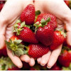 Strawberry is magical beauty ingredient